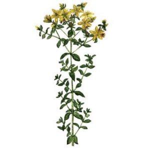 Hydrolat (eau florale) bio : Millepertuis 200ml